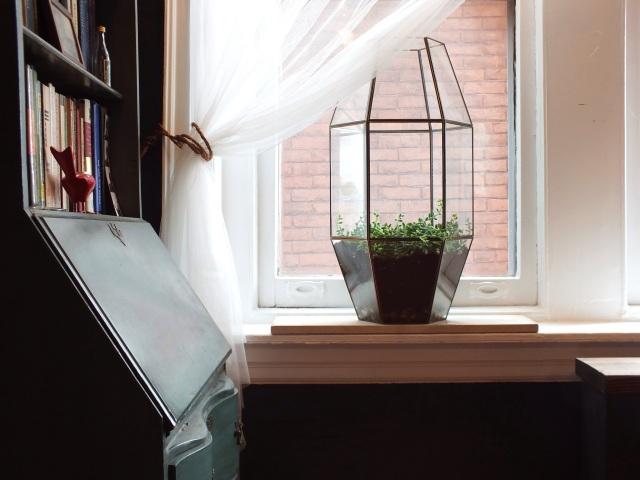 A terrarium made from a light fixture