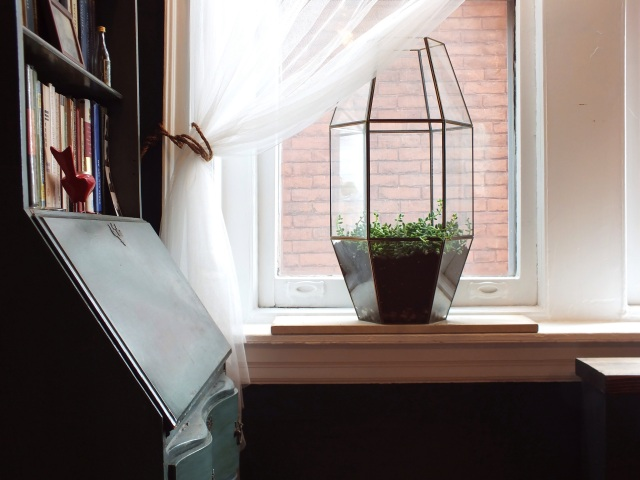 A terrarium made from a light fixture