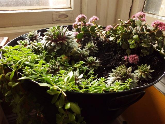 Indoor succulent garden | The Projectory