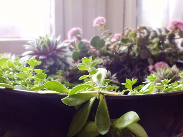 Indoor succulent container garden | The Projectory