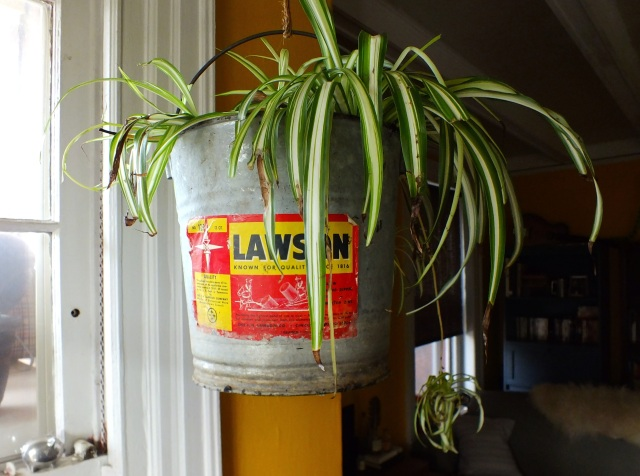 Hanging plant in a galvanized bucket | The Projectory